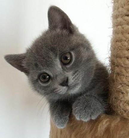 sexy dospívající chlupatá kočička
